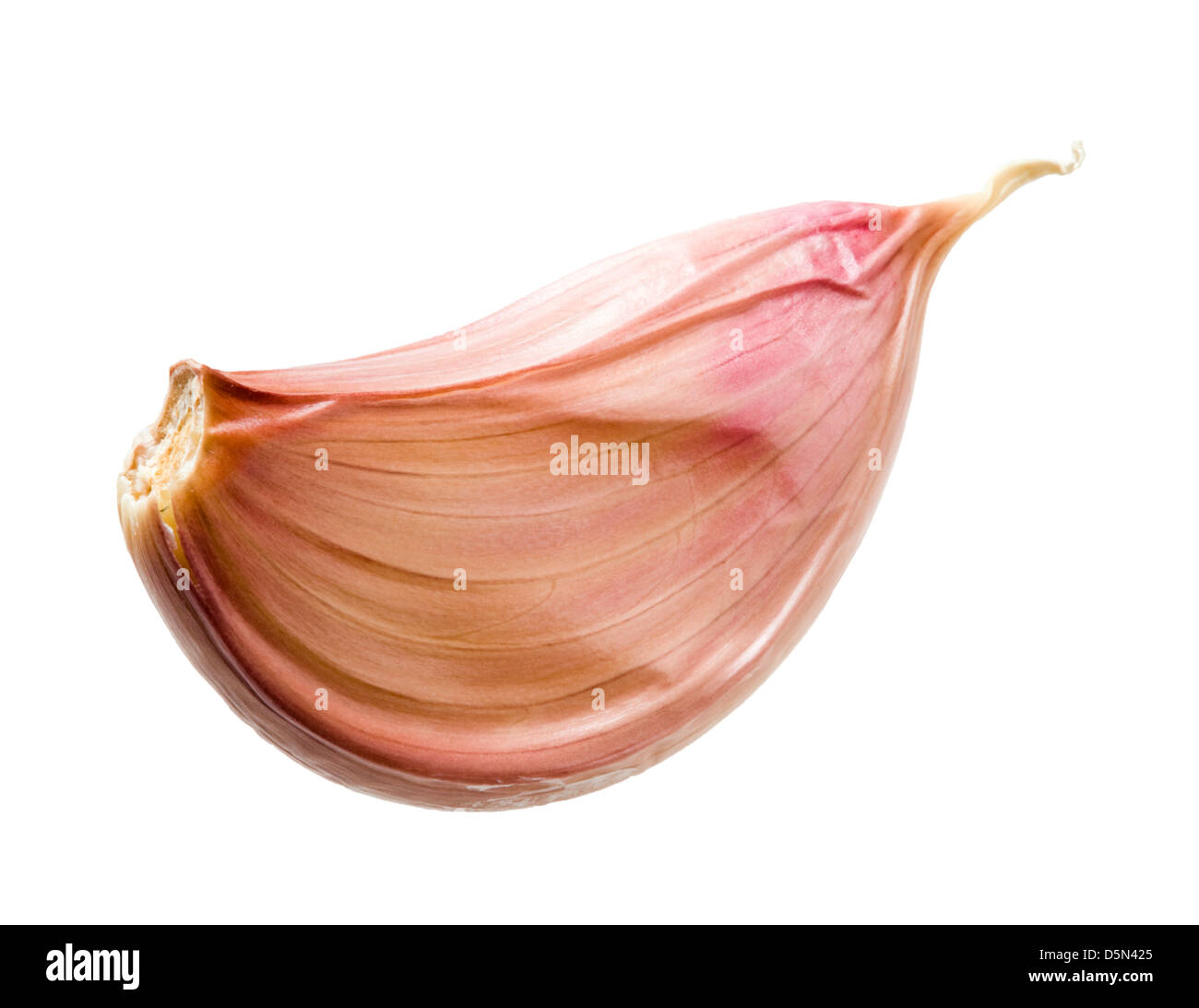 Garlic clove. - Stock Image