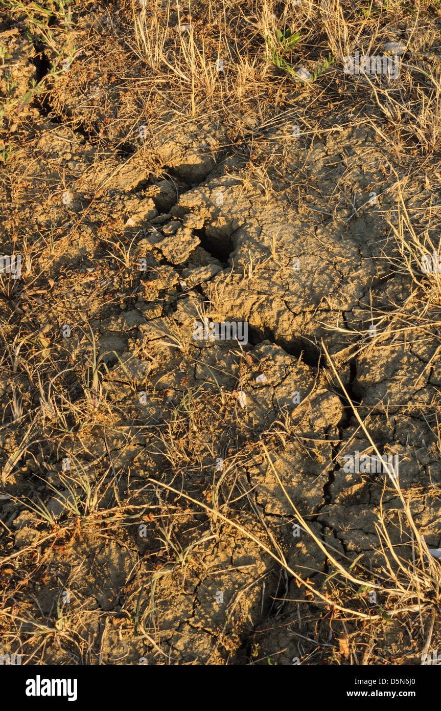Cracked dry soil - Stock Image