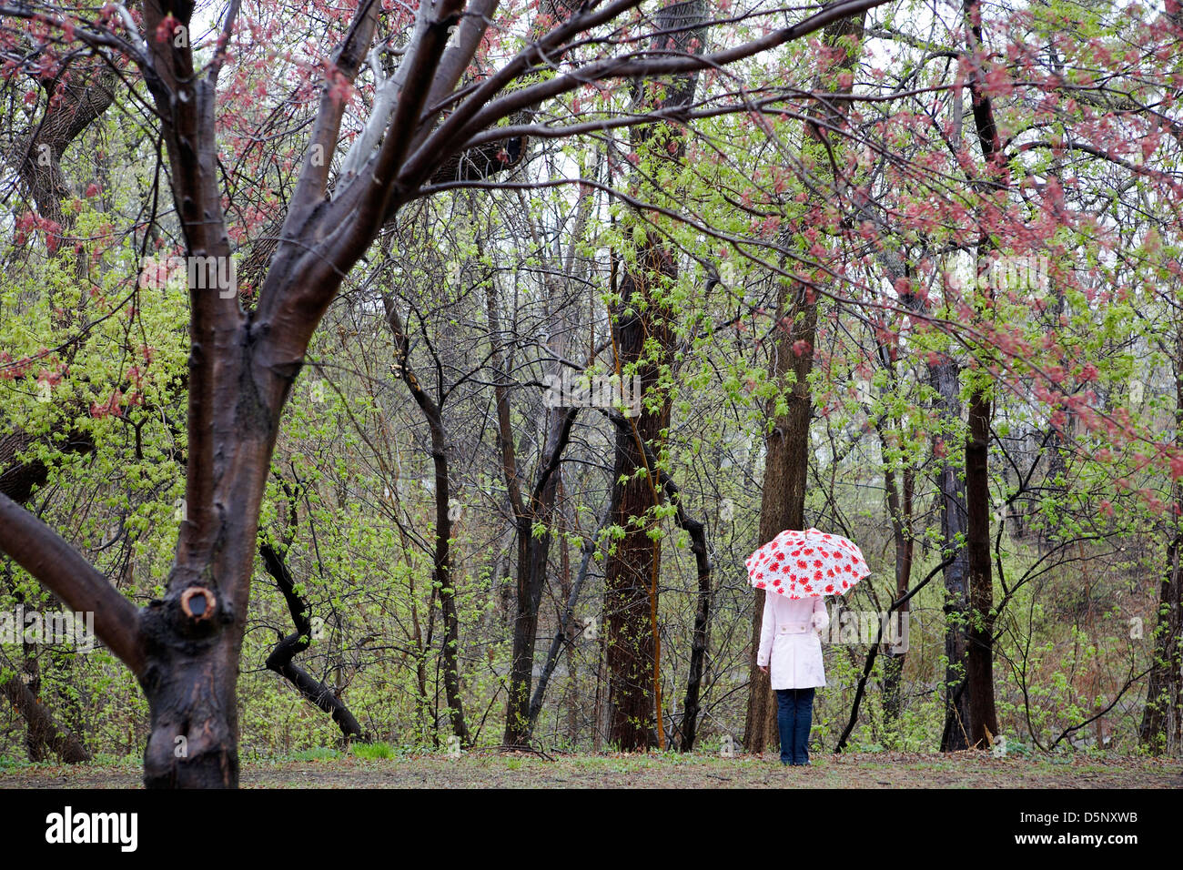 Woman holding umbrella in Spring landscape - Stock Image
