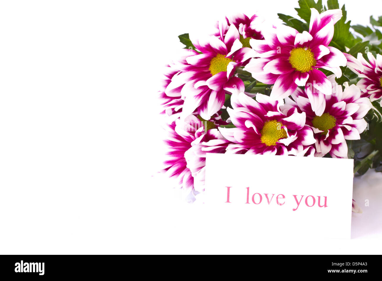 Beautiful Multi Colored Flowers On A White Background Stock Photo