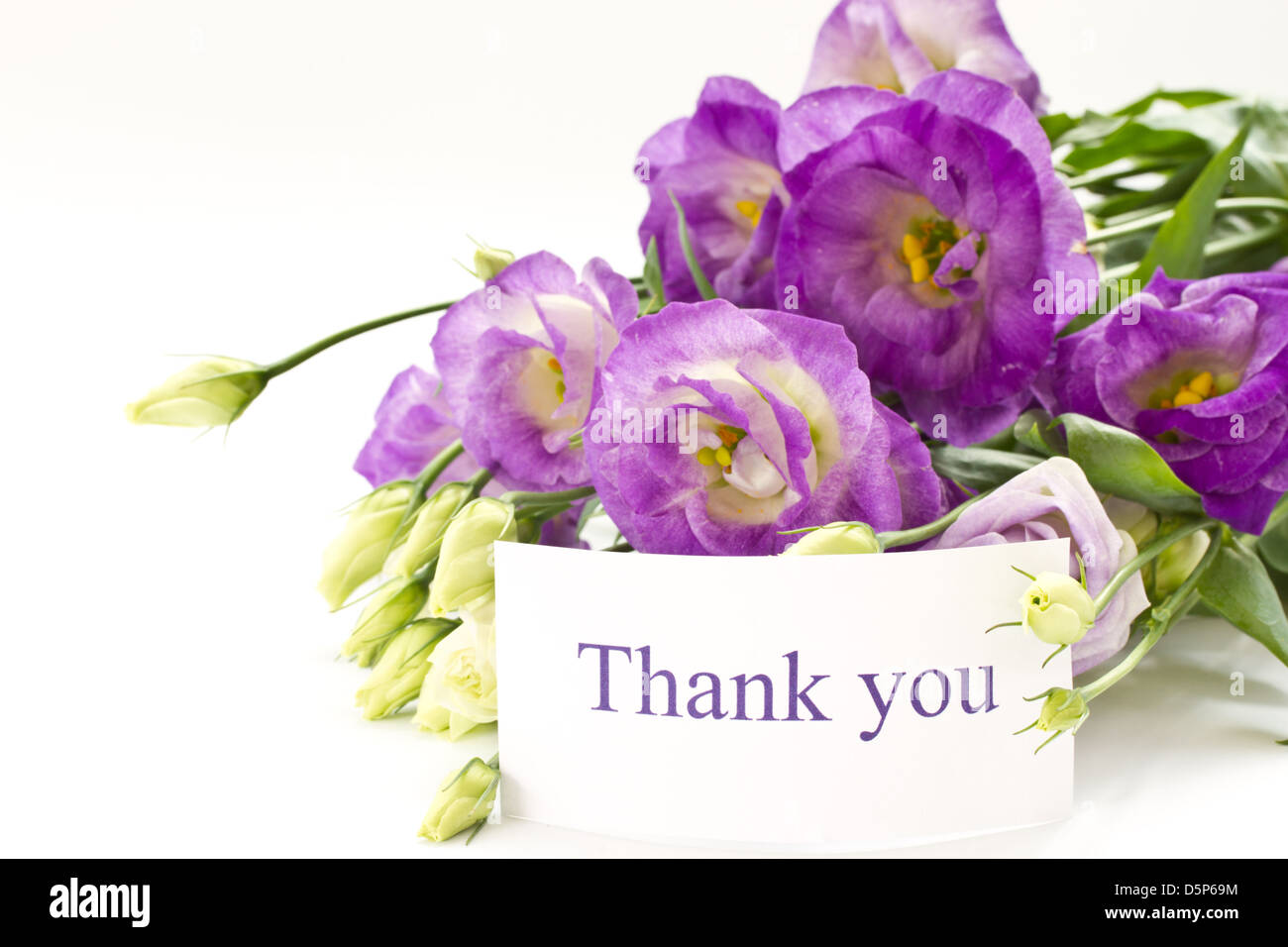 Beautiful bouquet of purple flowers on white lisianthus stock photo beautiful bouquet of purple flowers on white lisianthus thecheapjerseys Choice Image