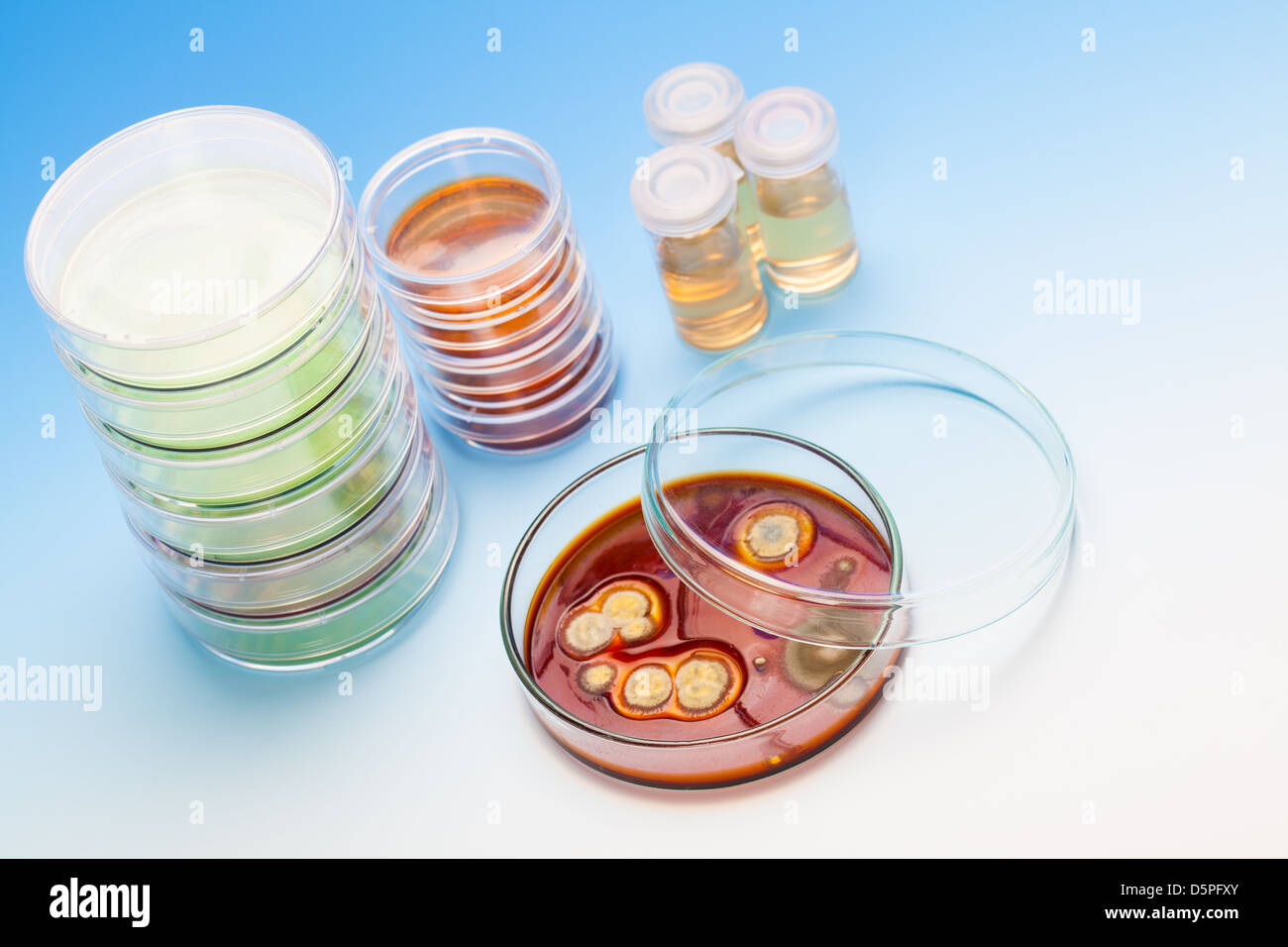 Petri dish with colonies of microorganisms - Stock Image