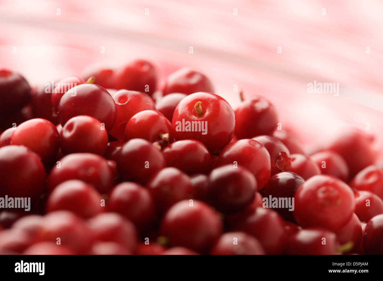 Fresh cranberries in white bowl, selective focus - Stock Image