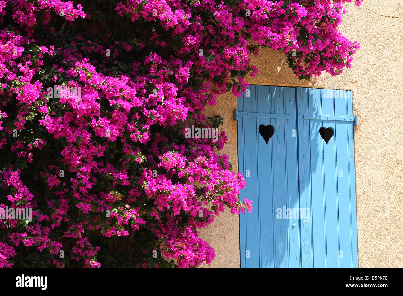 Sunny summer day in Porquerolles, French Riviera. Bougainvillea bush around the window with blue shutters with heart - Stock Image