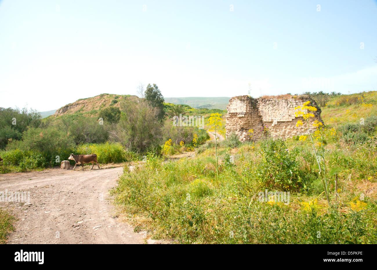 Tel Ubeidiya is located 3 km south of Lake Tiberias - Stock Image
