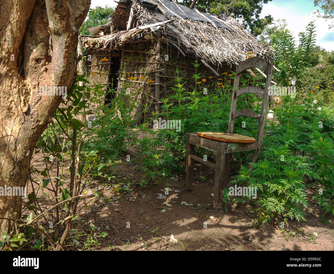 Poor family's straw hut in a Sri Lankan village near Sigiriya rock - Stock Image