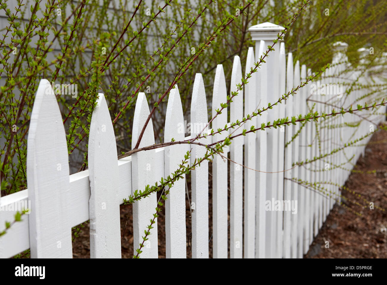 Spring foliage growing beyond picket fence - Stock Image