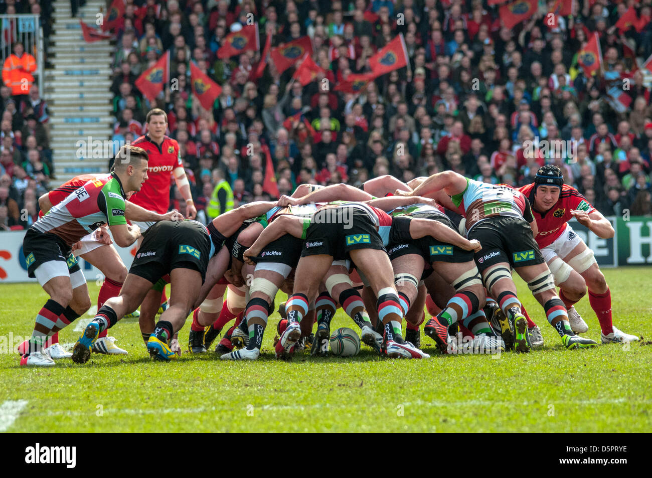 Scrum down during the Heineken Cup quarter-final match between Harlequins and Munster at the Twickenham Stoop, London, - Stock Image