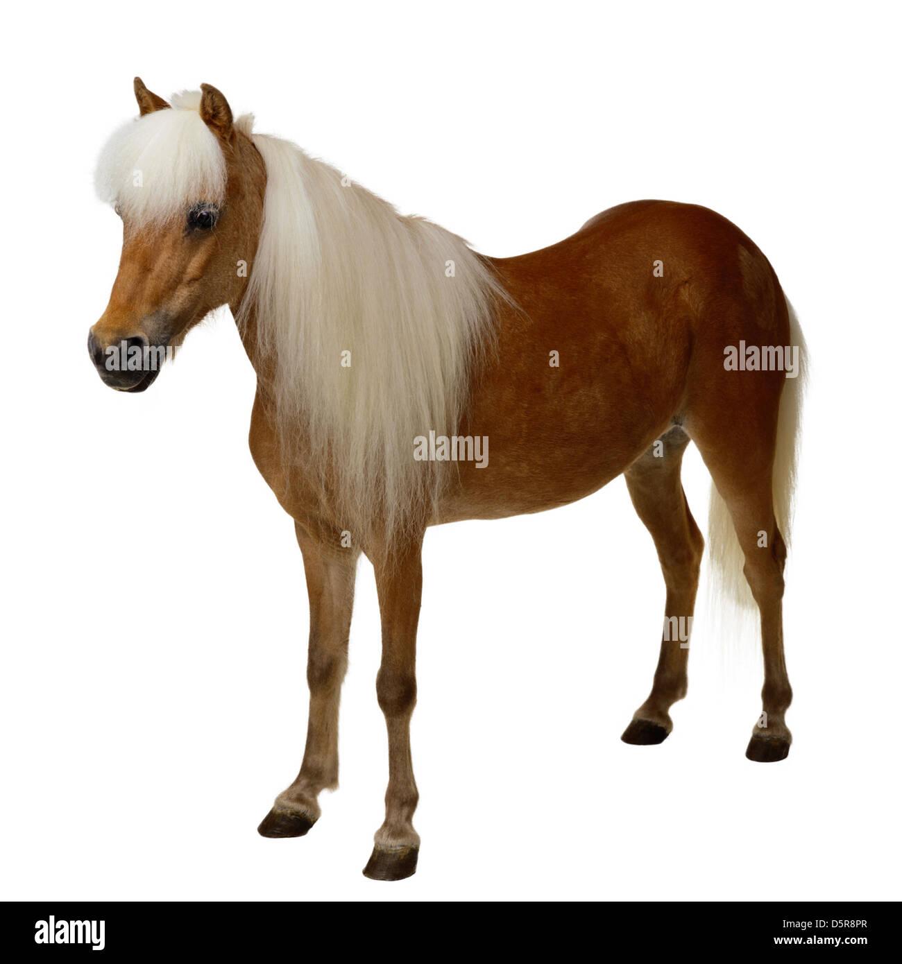 Horse isolated - Stock Image