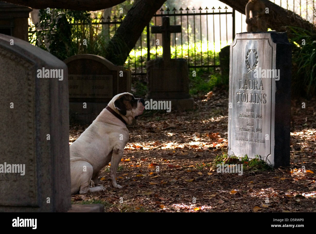 DOG & GRAVESTONE THE NUMBER 23 (2007) - Stock Image