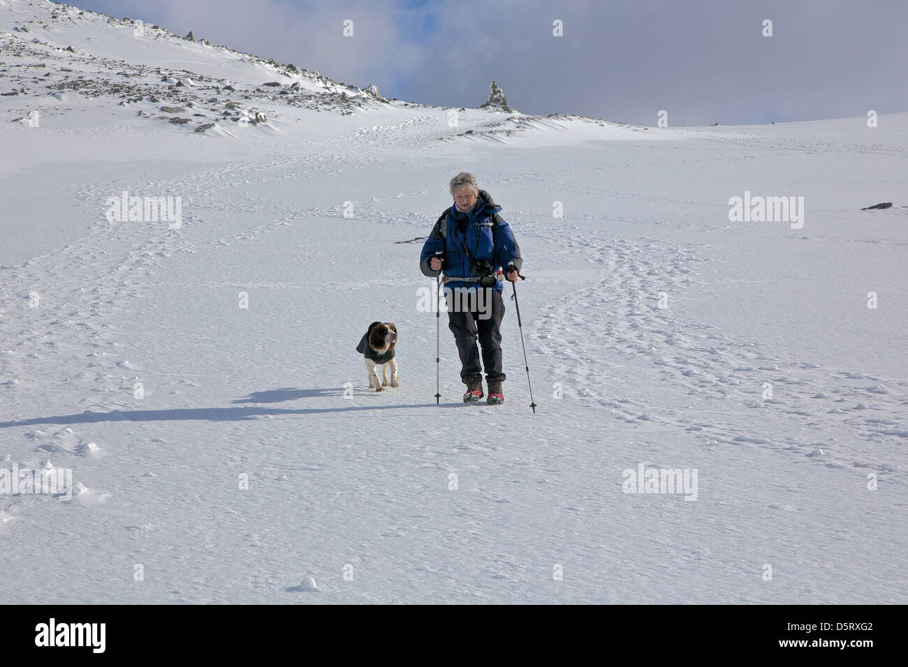 Woman hiker with dog approaching the summit of Ben Nevis in snow - Stock Image