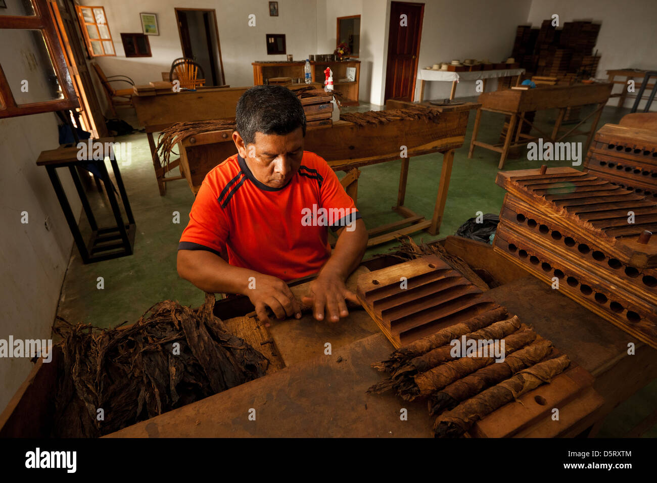 Cigars in the making at Joyas de Panama cigar factory, La Pintada village, Cocle province, Republic of Panama. - Stock Image