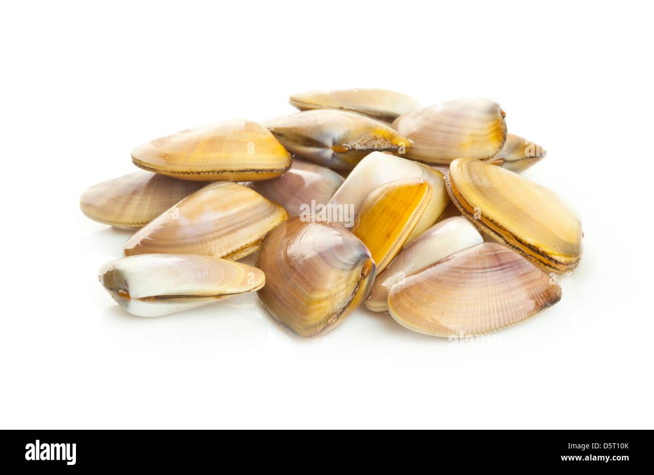 Wedge Shell Donax Vittatus Stock Photos & Wedge Shell Donax