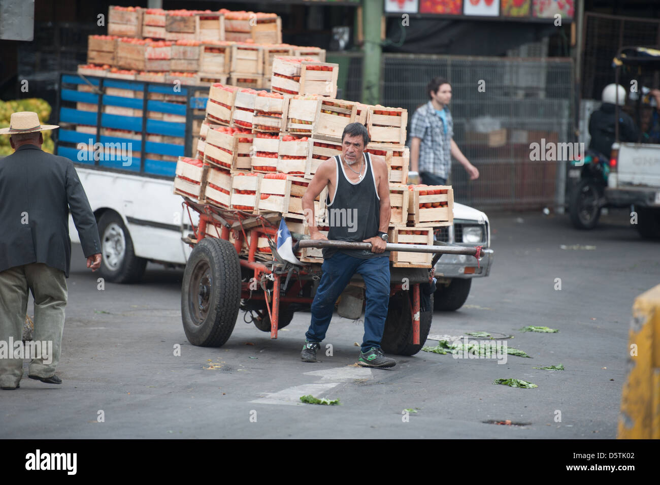 Worker moving vegetables on a truck at Lo Valledor central wholesale produce market in Santiago, Chile - Stock Image