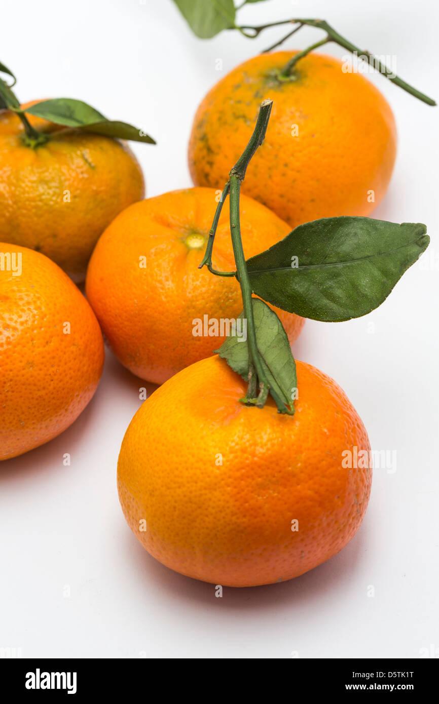 Mandarin Oranges with leaves on plain background - Stock Image