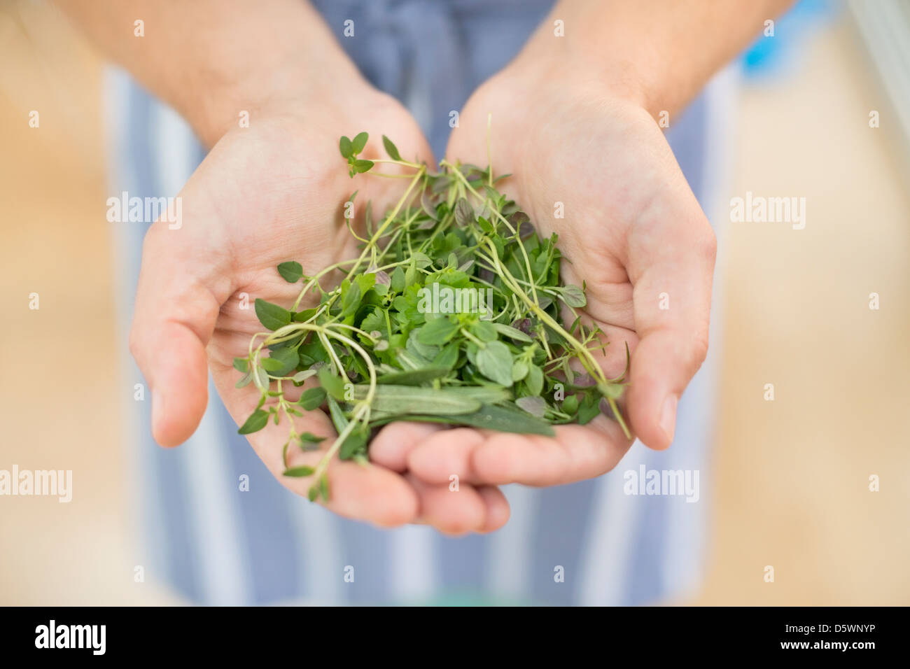 Hands holding bunch of herbs - Stock Image