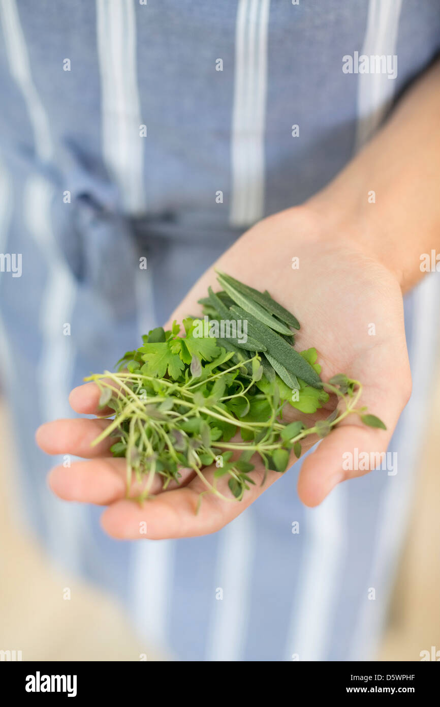 Woman holding handful of herbs - Stock Image