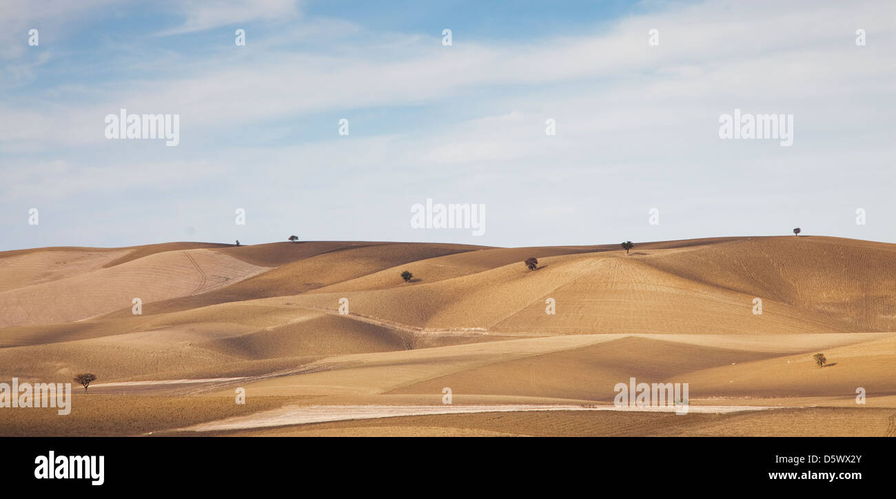 Trees growing in dry rural landscape - Stock Image