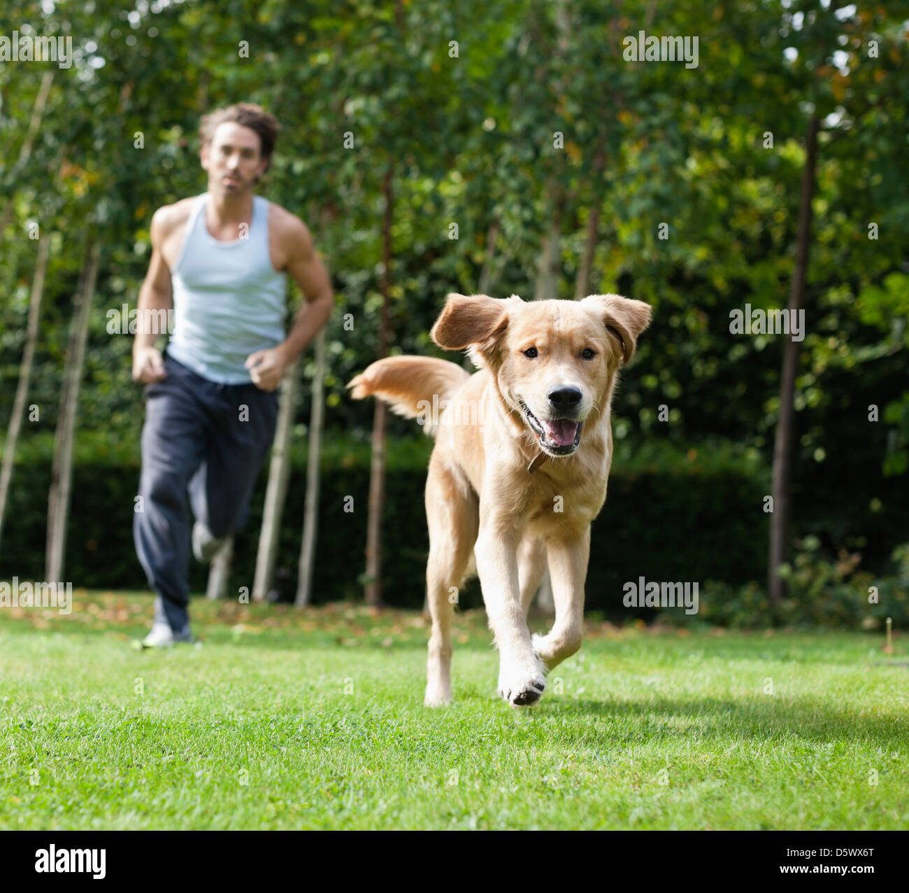 Man running with dog in park Stock Photo: 55273760 - Alamy