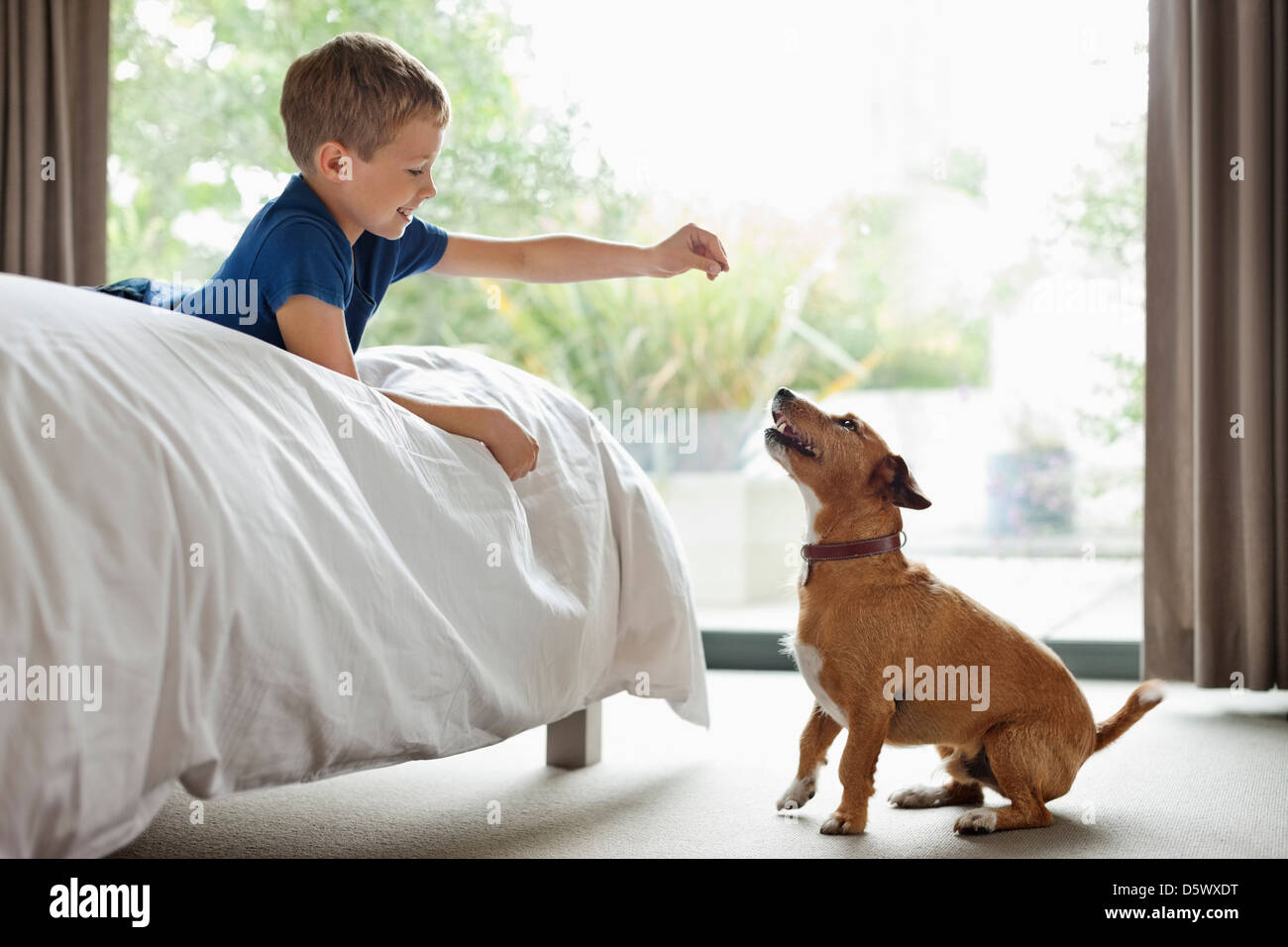 Boy giving dog treat in bedroom - Stock Image