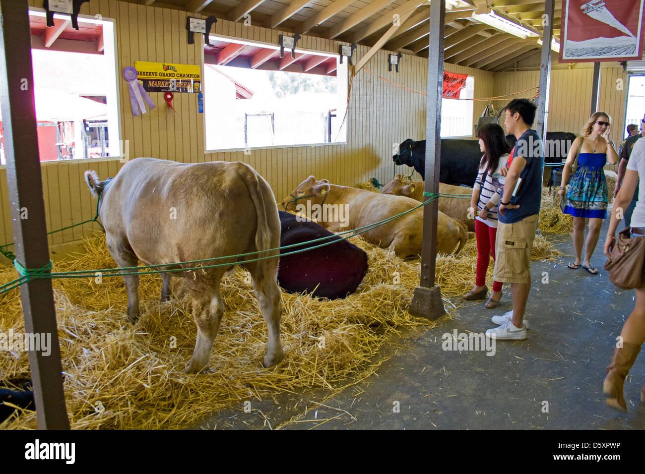 Livestock Auction at Orange County Fair, Costa Mesa, Orange County, California - Stock Image