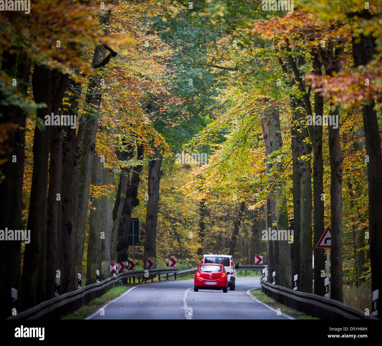 A car drives through an autumn forest in Templin, Germany, 25 October 2012. Photto: Patrick Pleul - Stock Image