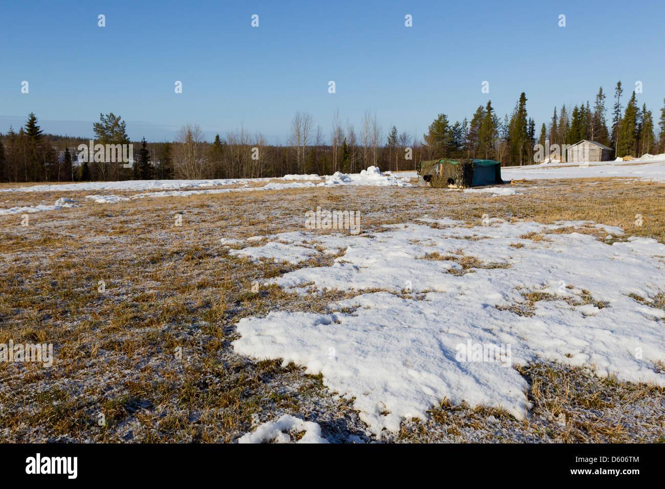 Mobile hide at Black Grouse Lyrurus tetrix lek near Kuusamo, Finland in Apirl. - Stock Image
