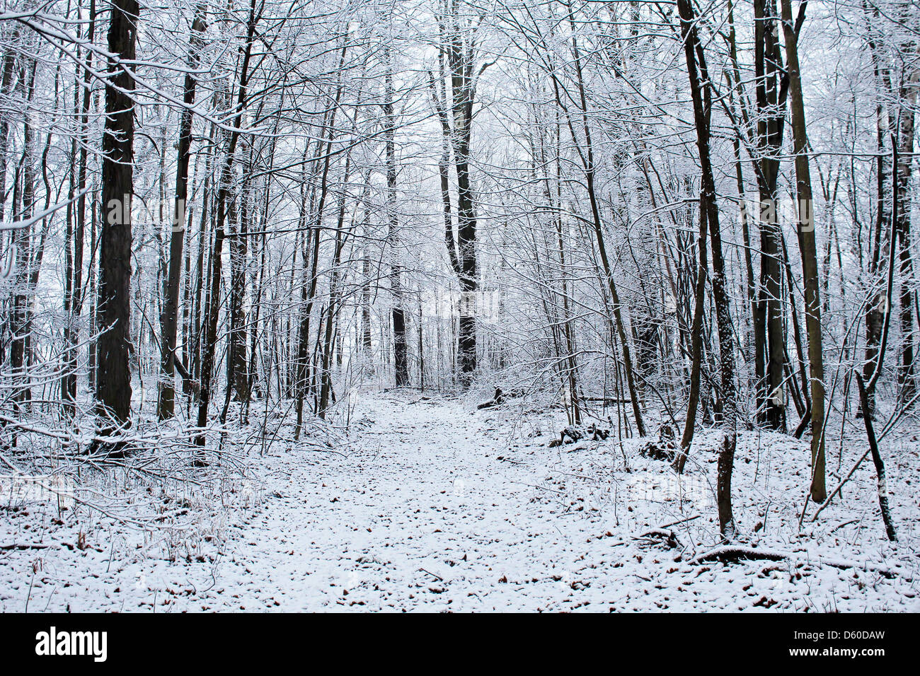A snowy path through a beautiful winter woods. - Stock Image