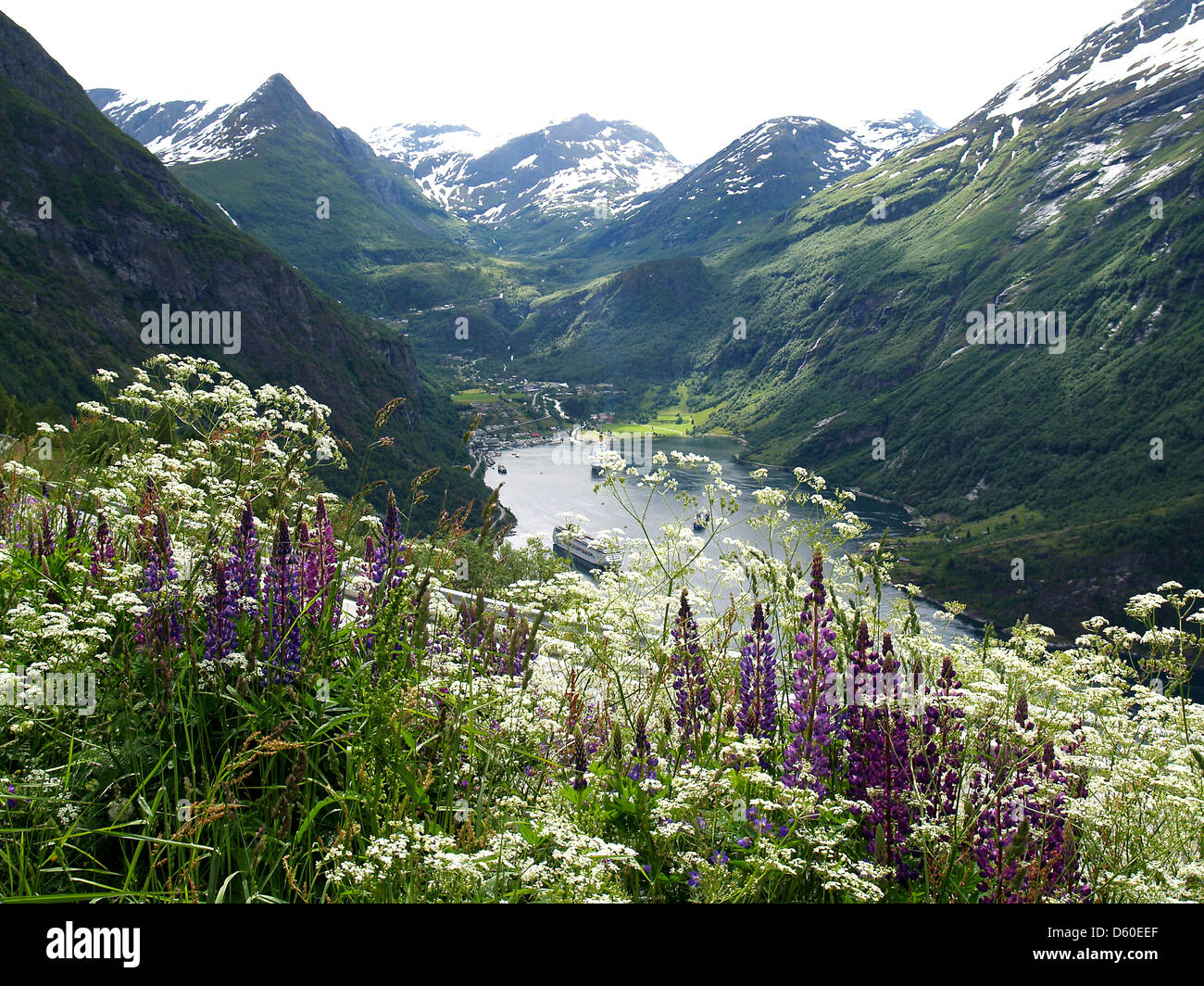 Wildflowers and lupines over the Geiranger Fjord,Norway - Stock Image