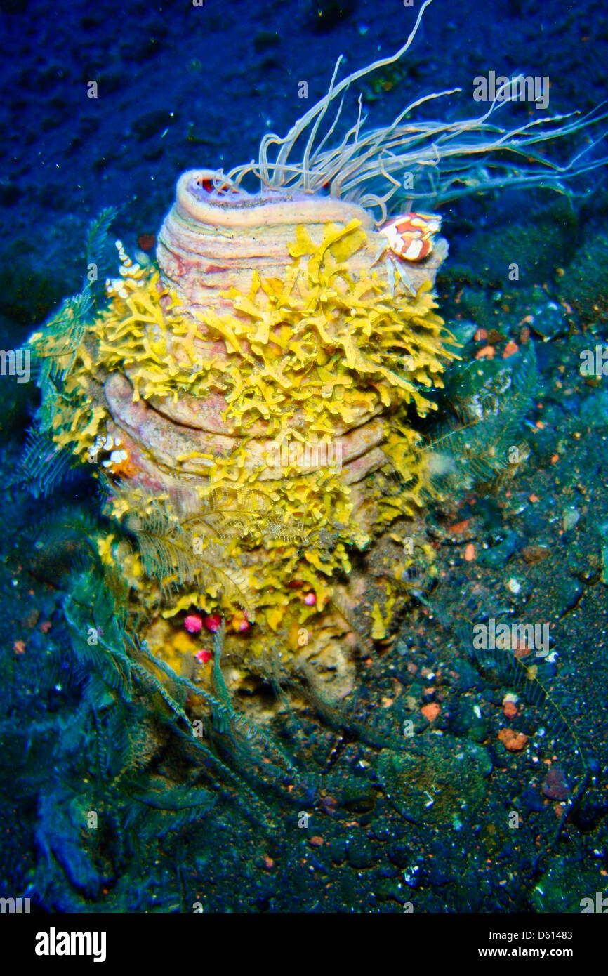 pictures of wild animals under the sea, Indonesia. - Stock Image