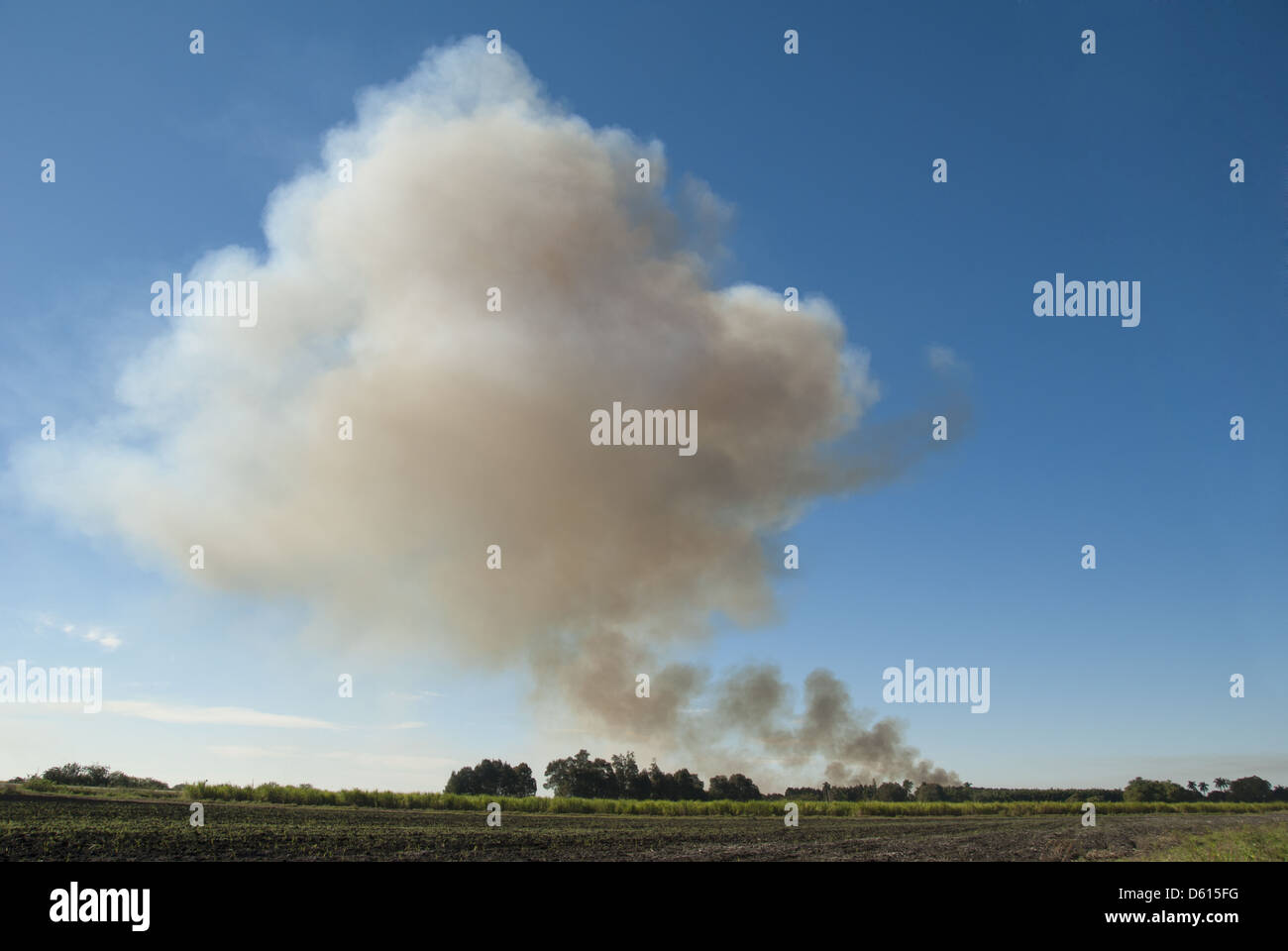 Smoke rising from burning sugar cane fields before harvest in south Florida, USA - Stock Image
