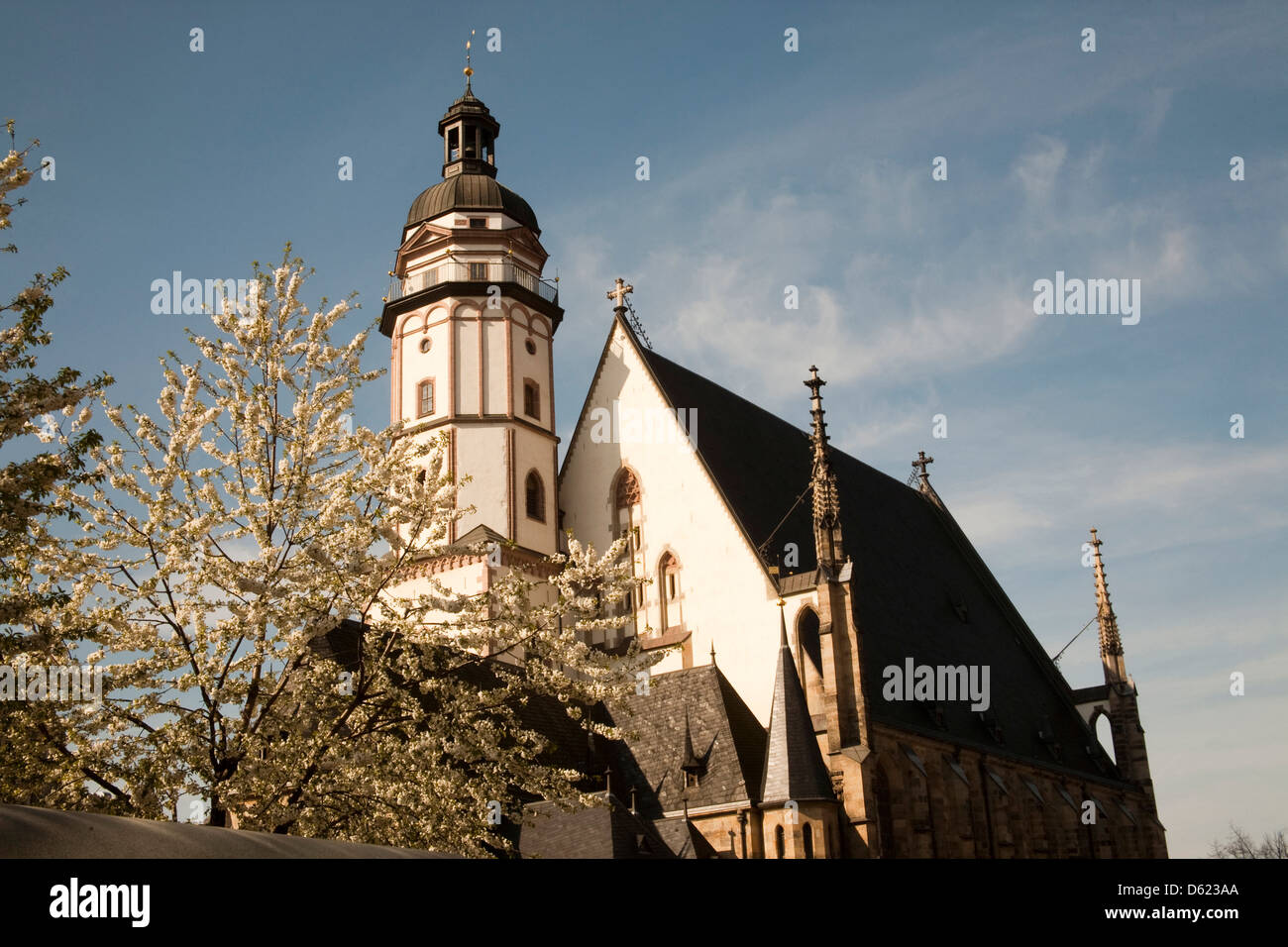 Cherry trees abloom and the famed St. Thomas Church known as the Church of Bach in Leipzig, Germany. Stock Photo