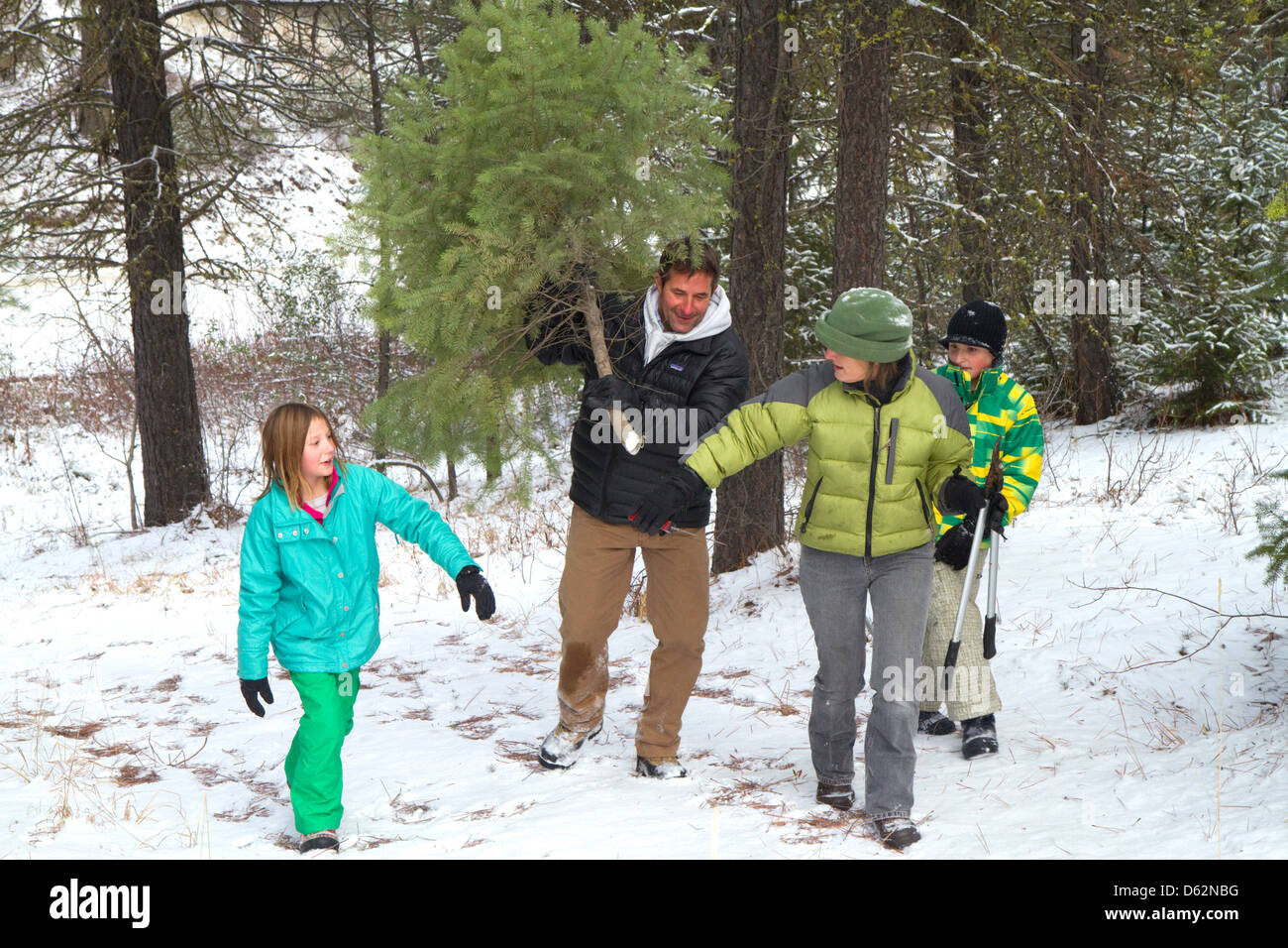 Family cutting a christmas tree in the Boise National Forest near Idaho City, Idaho, USA. - Stock Image