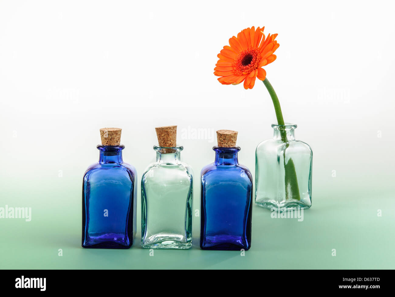 Colored mini glass bottles and flower - Stock Image