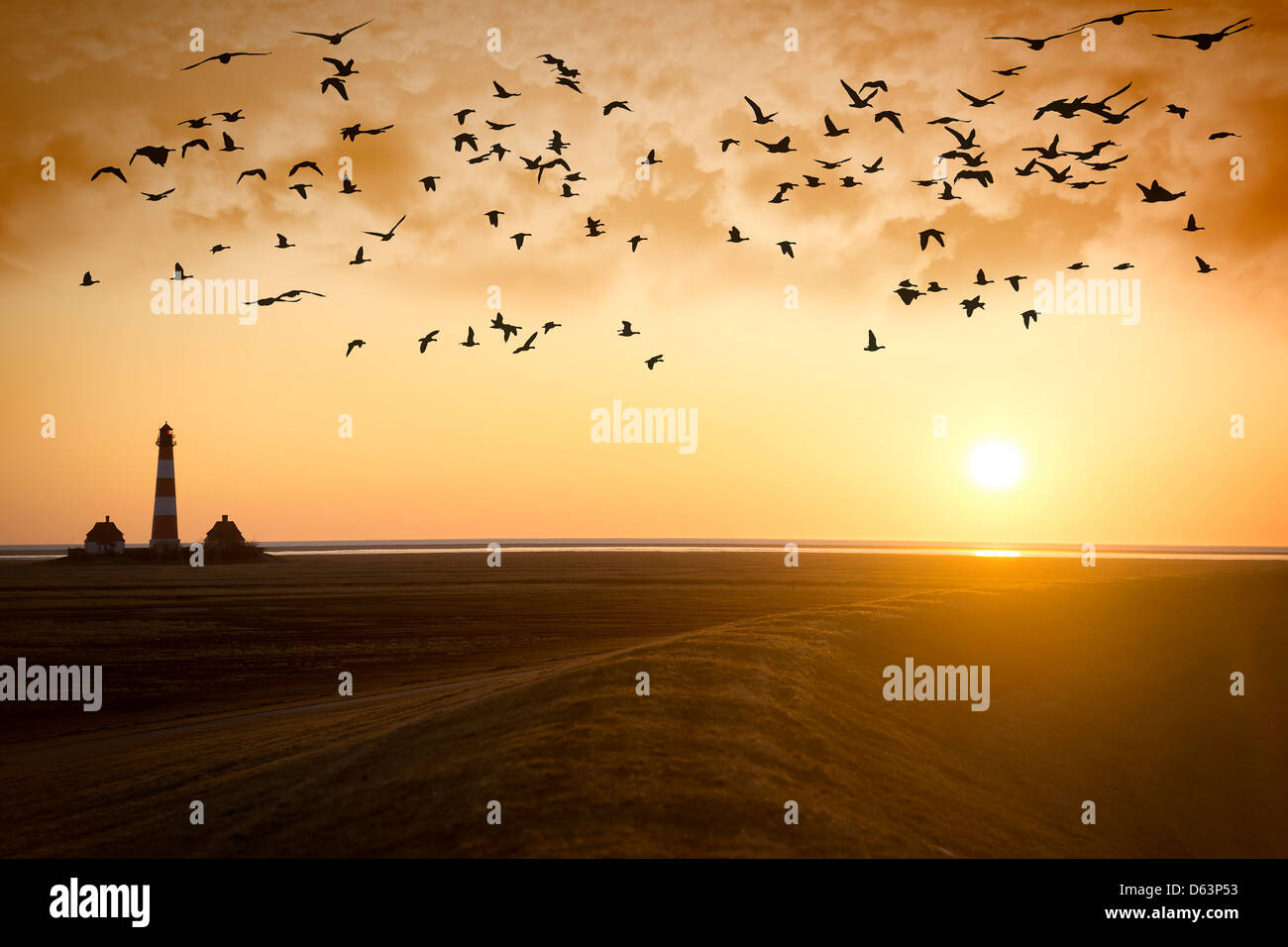 Sunset at Lighthouse Westerhever with migratory birds on the North Sea in Germany - Stock Image