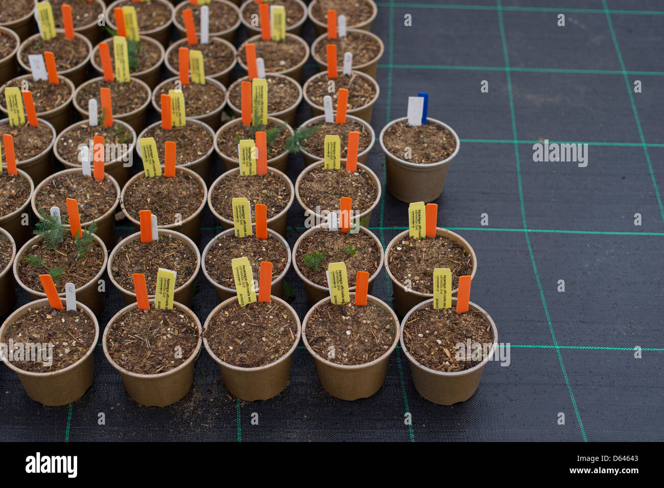 Plant pots pictured on a table at a garden nursery - Stock Image