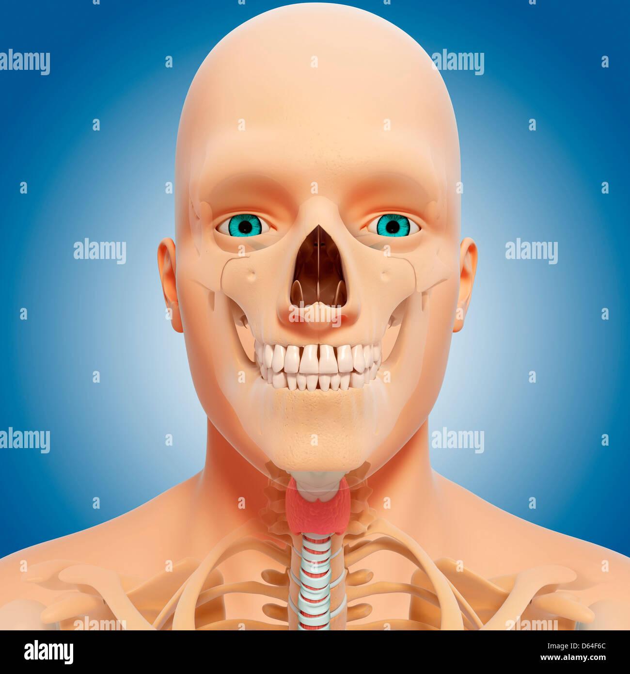 Nose Cartilage Stock Photos & Nose Cartilage Stock Images - Alamy