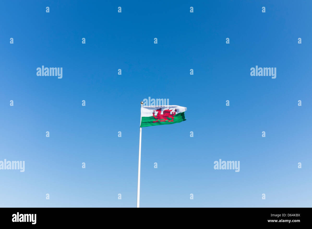 Welsh flag on pole in the wind. - Stock Image
