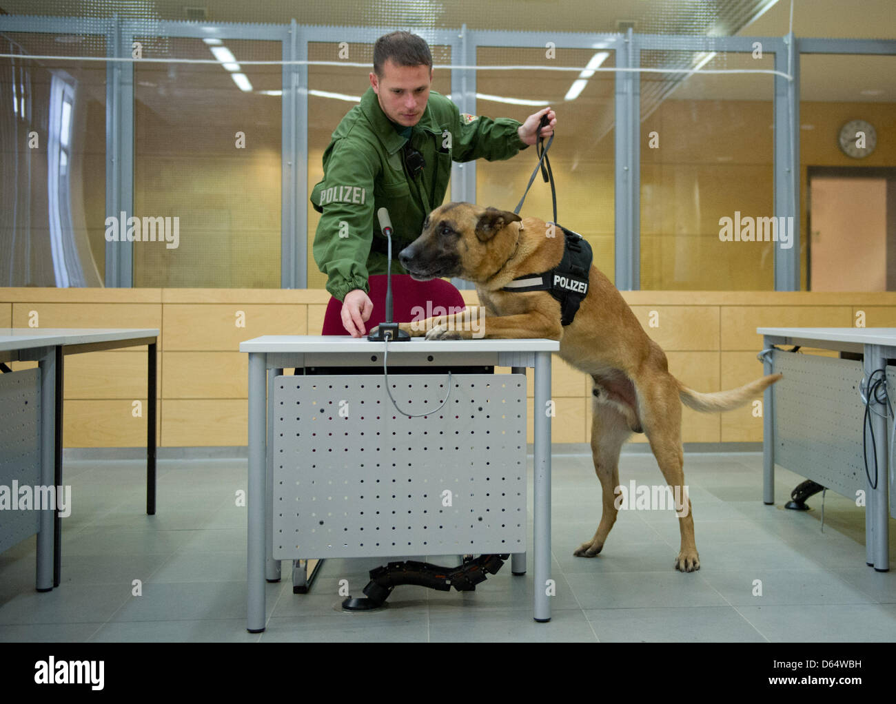 A policeman and a dog search the court room in Kaiserslautern, Germany, 4 June 2012. A 29-years-old member of the - Stock Image