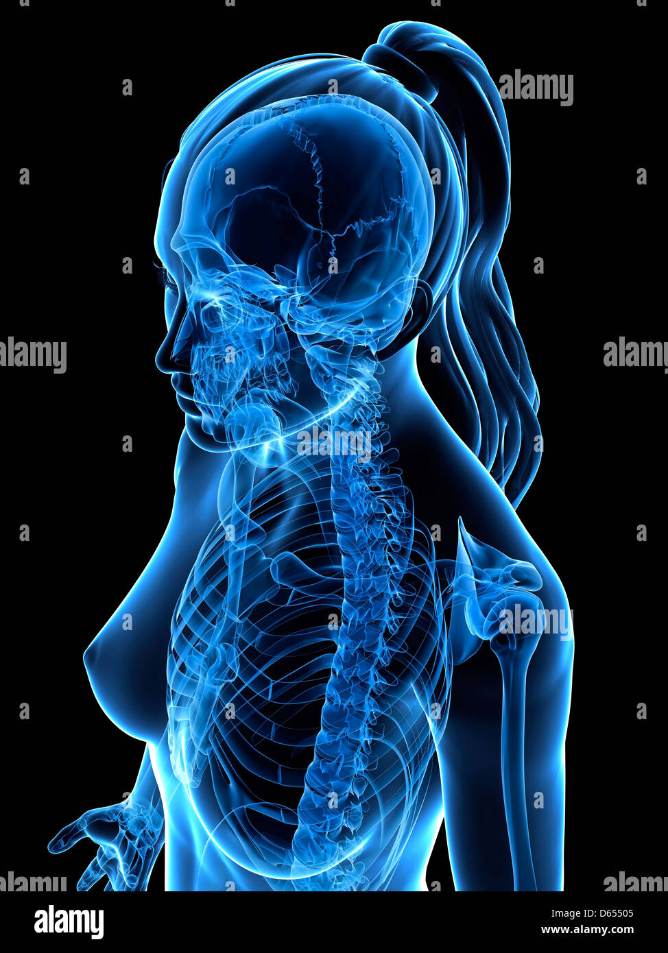 Female upper body, artwork - Stock Image