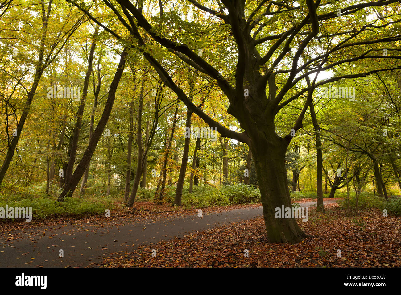 calm silent forest in autumn - Stock Image