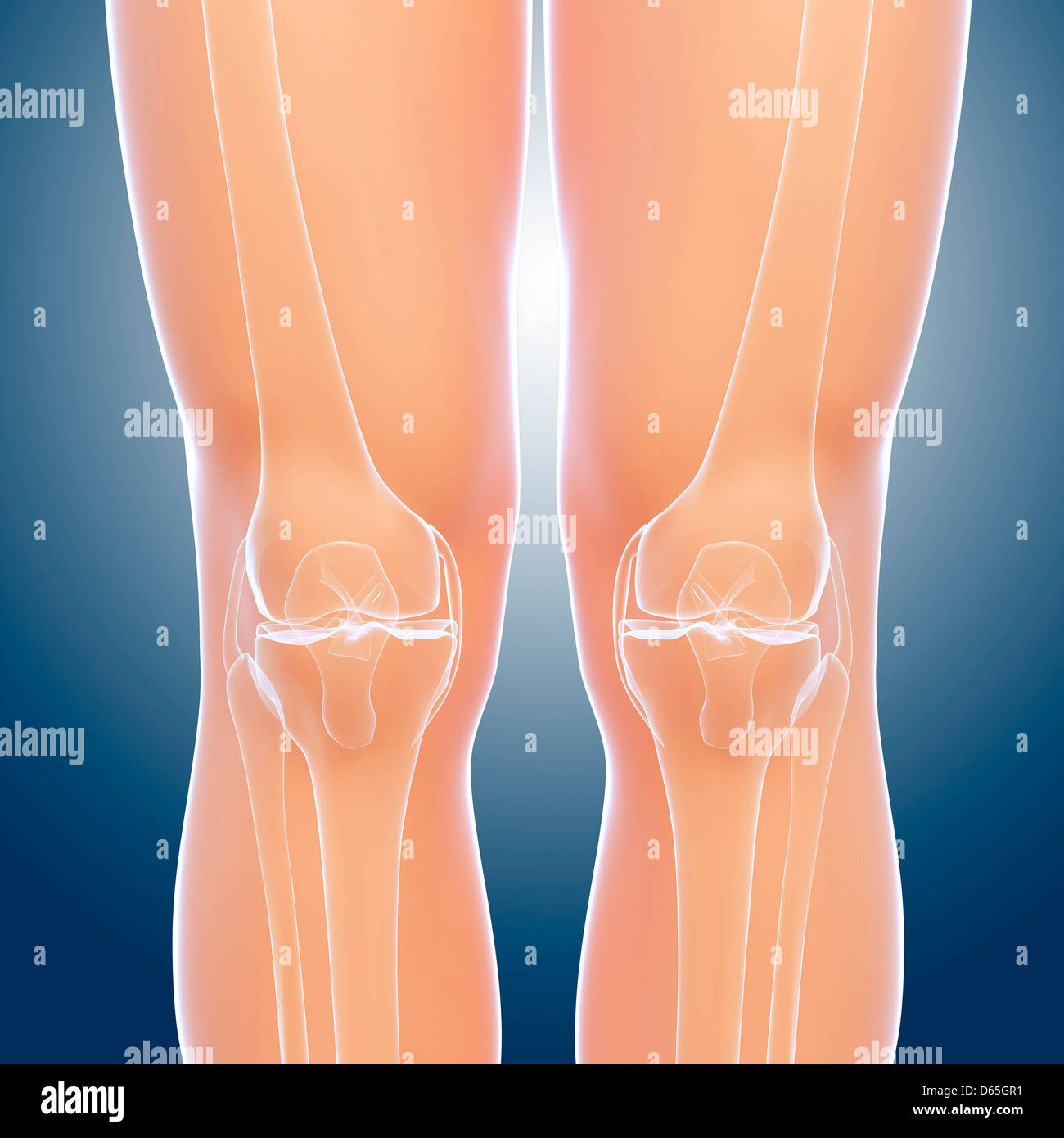 Normal Knee Stock Photos Normal Knee Stock Images Alamy