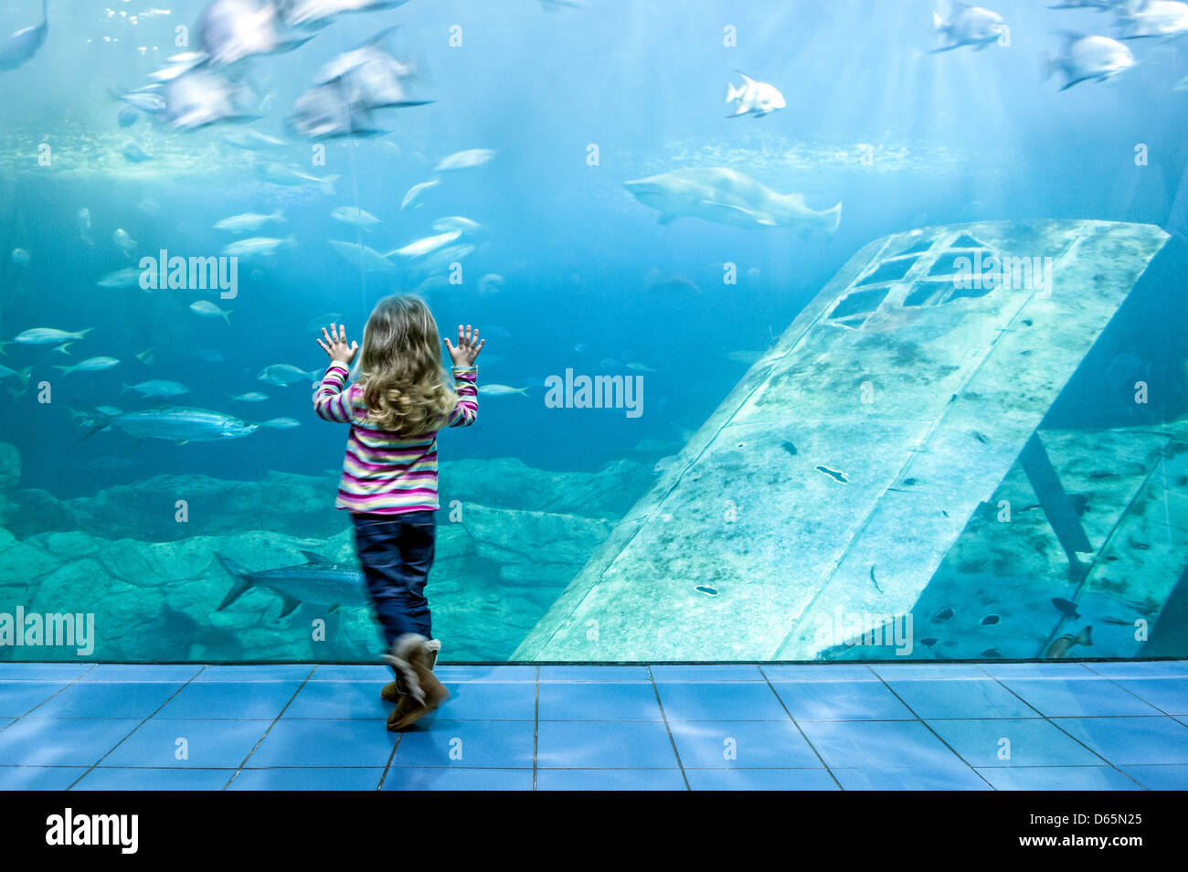 A small girl, hands pressed against the glass of the massive shark tank at the Plymouth aquarium, Plymouth, Devon,UK - Stock Image