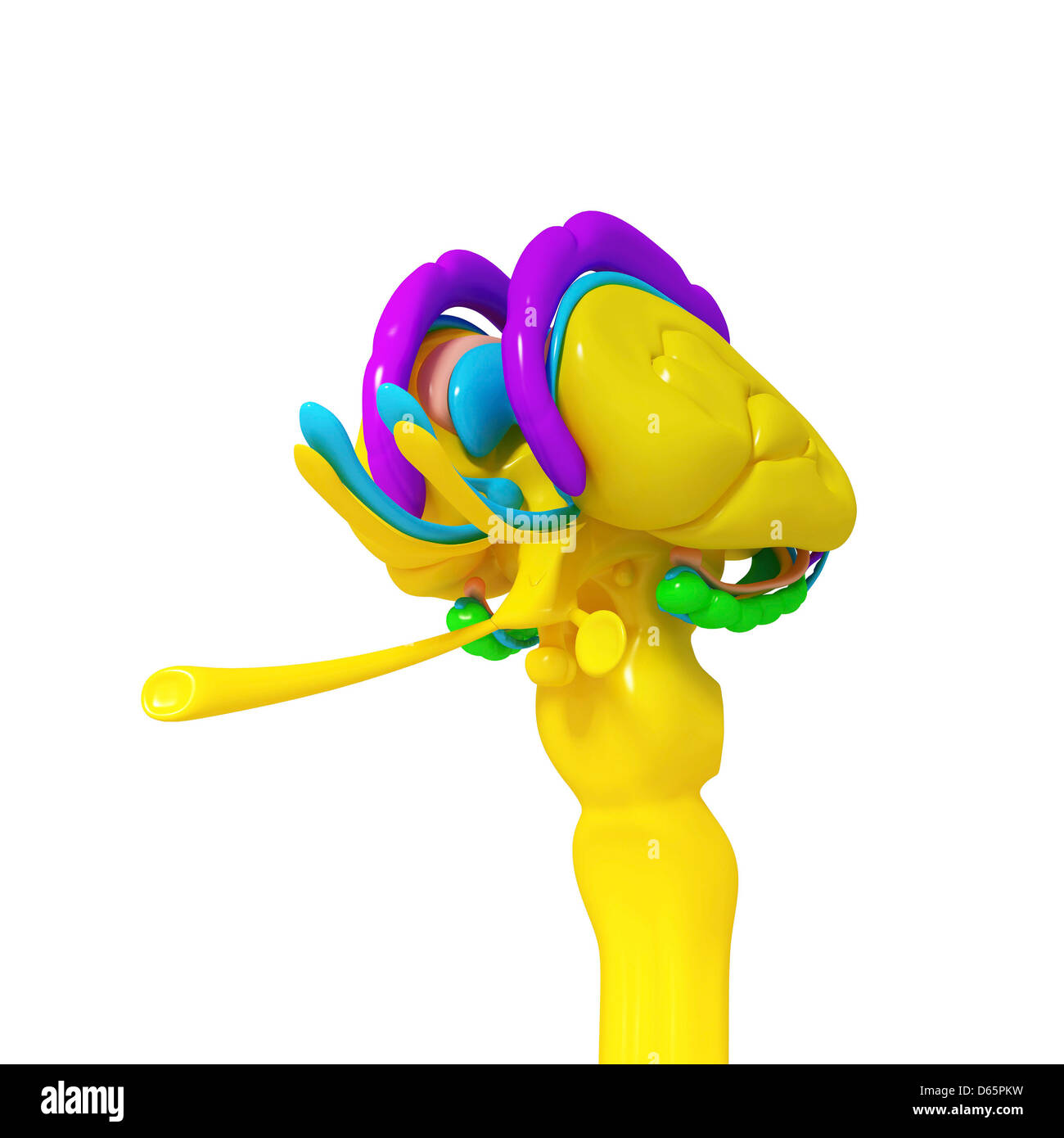 Brain anatomy, artwork Stock Photo