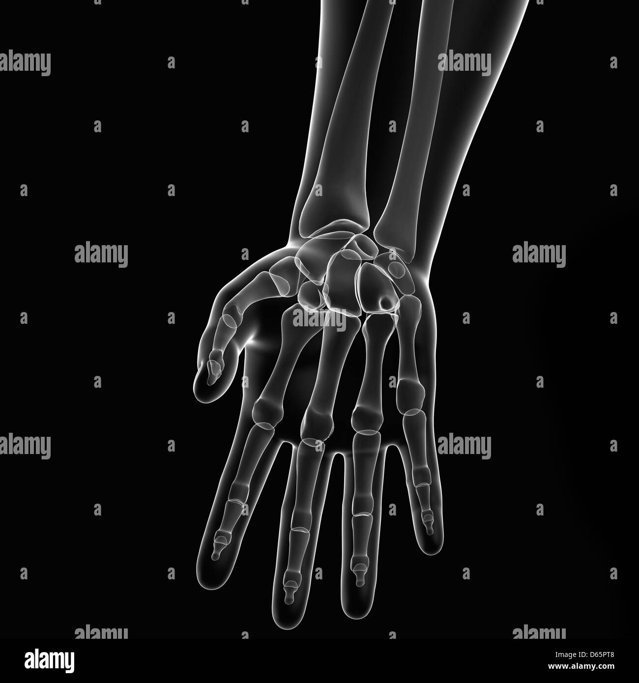 Skeleton Hand Close Up Stock Photos Skeleton Hand Close Up Stock