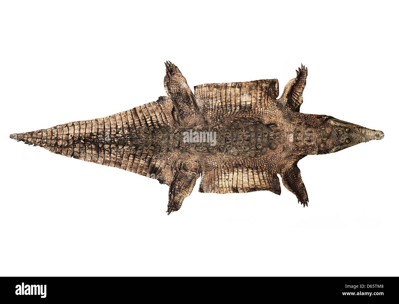 Old And Worn Alligator Skin - Stock Image