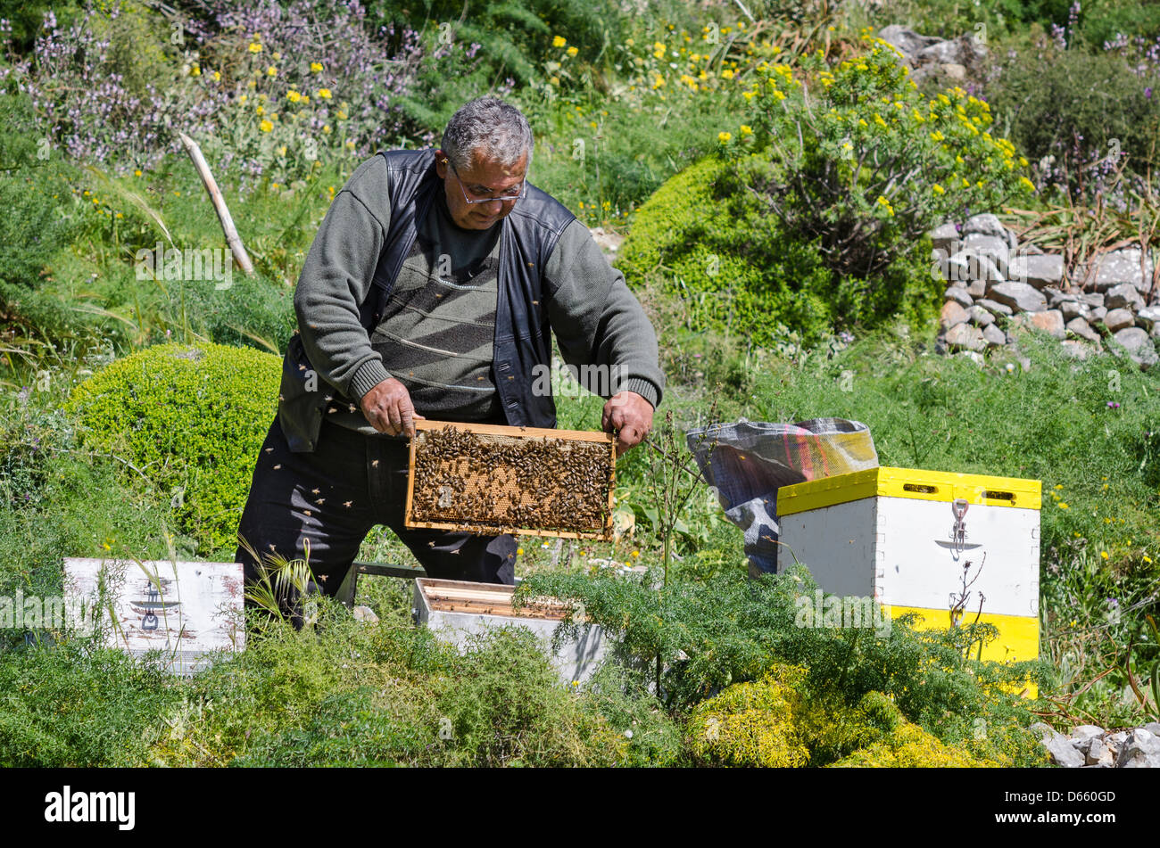 A beekeeper inspecting his hives in the Mani, Peloponnese, Greece. - Stock Image