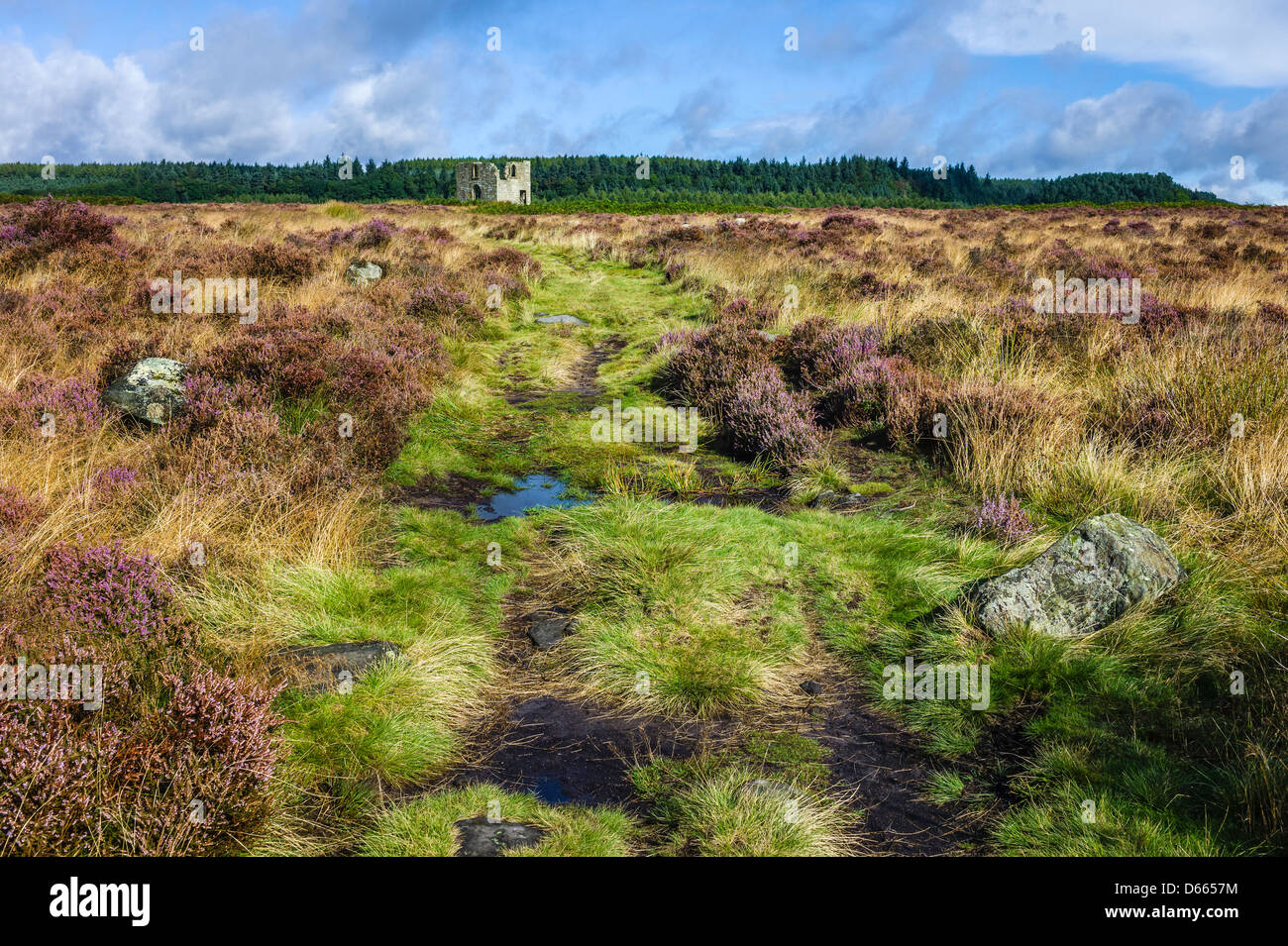 Skelton Tower in the North York Moors National Park near Levisham; the heather is in bloom on this fine summer morning. - Stock Image