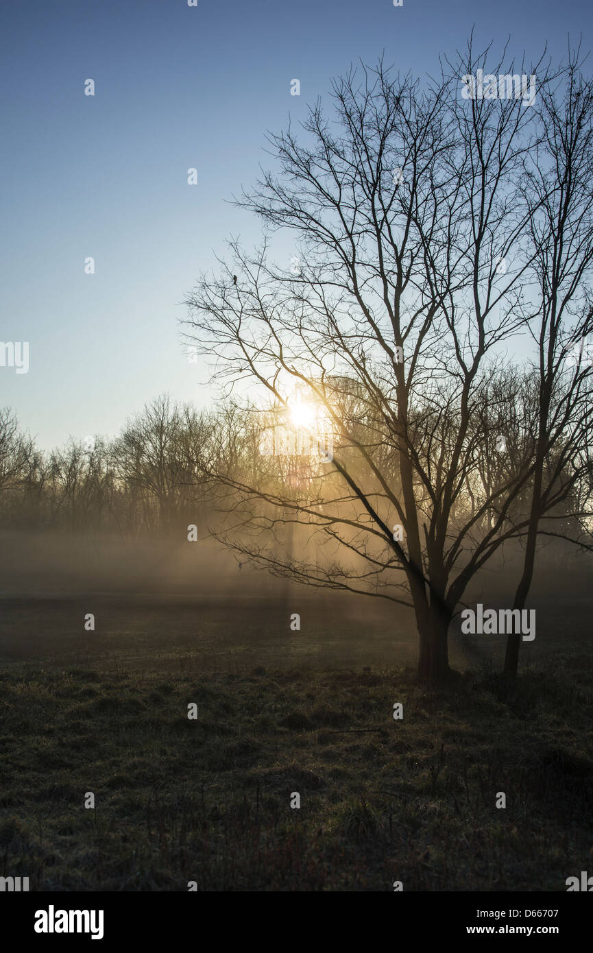 Early Morning Sun Through The Fog & Trees - Stock Image