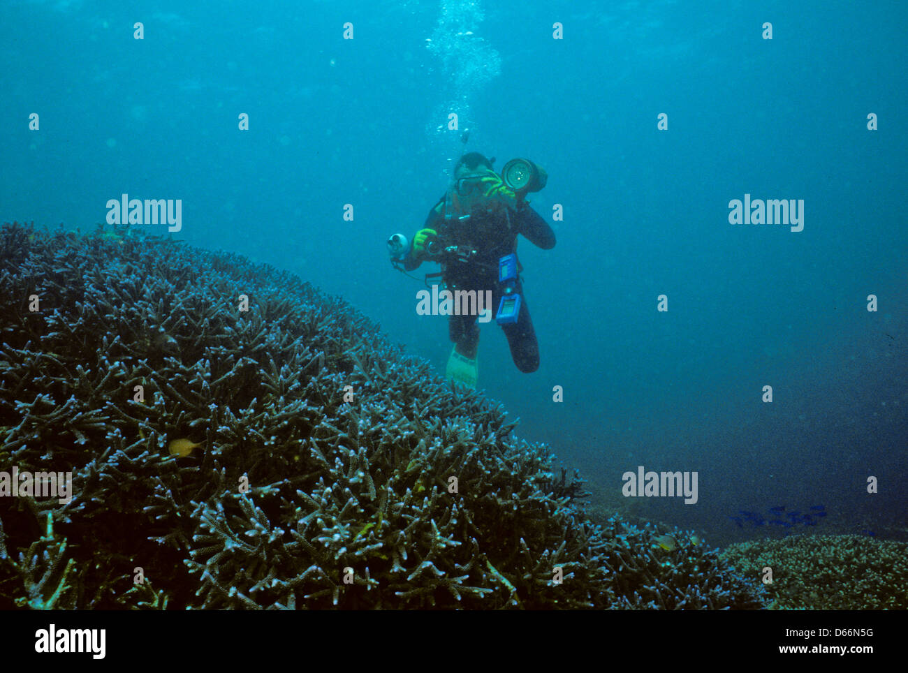 diver over staghorn coral reef sipadan nov 1990 underwater slide